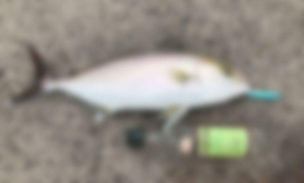 【海外】澎湖島(ポンフー島)で釣りをしてあの高級魚!を釣った話