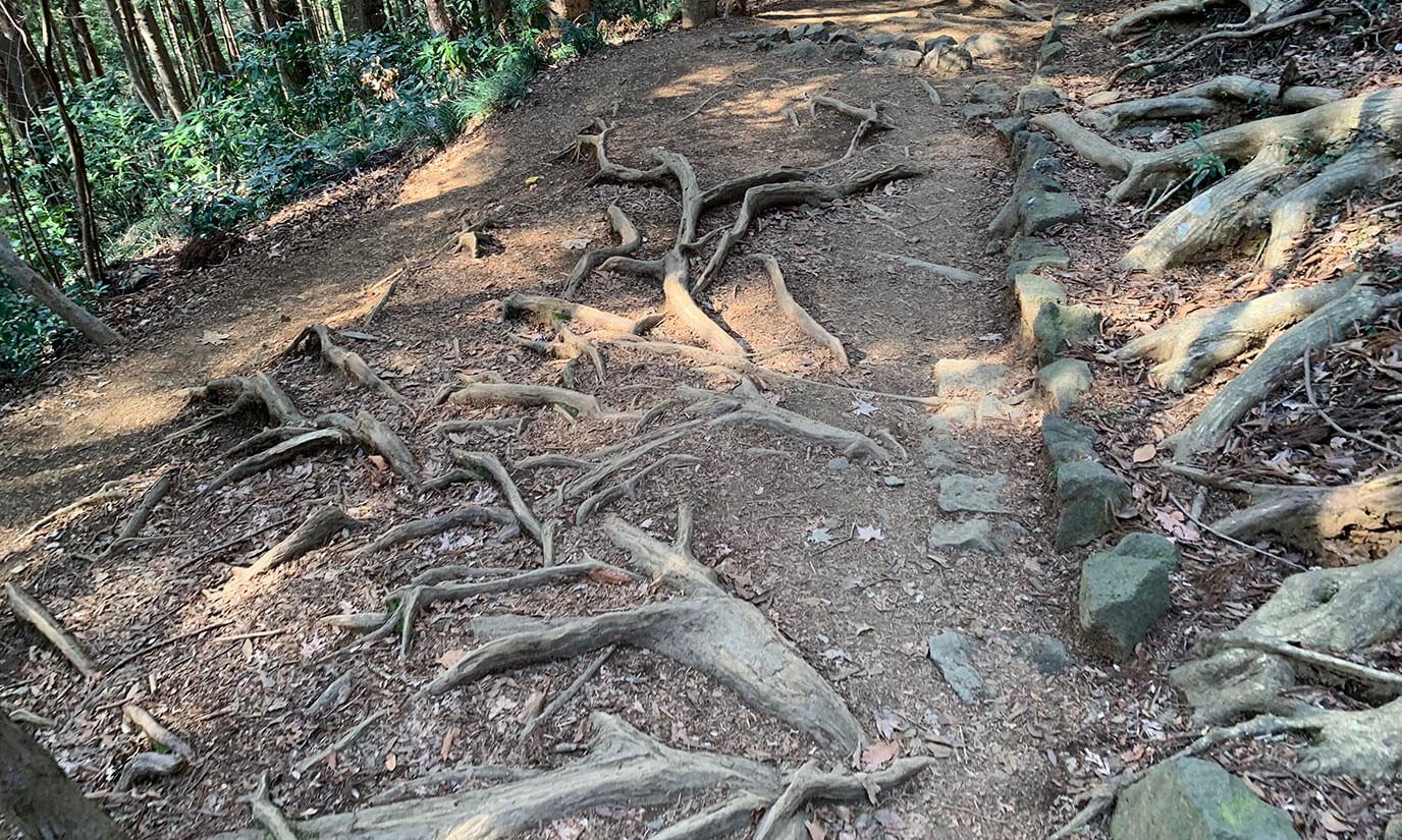 地面は木の根が出ているのでスニーカー(歩きやすい靴)は必須と言えます